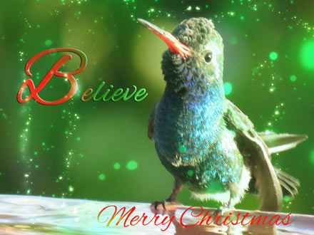 Broad-billed Hummingbird at a bath with red to green gradient text
