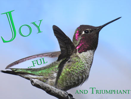 Anna Hummingbird on branch with wings up. Text Joy and ful in the sky by the wing plus and Triumphant