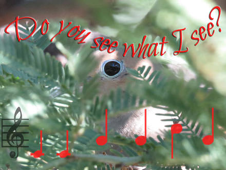 Mourning Dove eye, circled with blue all but hidden by tree. Text, Do you see what I see?